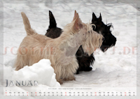 Scottish Terrier Kalender 2012 Januar
