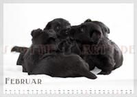 Scottie Kalender 2012 Februar