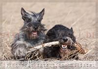 Hunde Kalender 2012 November