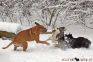 boxer-staff-001-2563