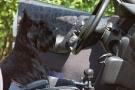 hundeausstellung-berlin-2011_8307