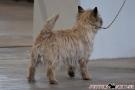 hundeausstellung-berlin-2011_8365