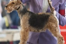 hundeausstellung-berlin-2011_8784