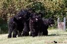 schwarzer-terrier-002-0284