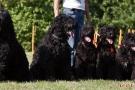 schwarzer-terrier-006-0406
