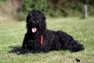 schwarzer-terrier-009-8886