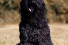 schwarzer-terrier-011-8942