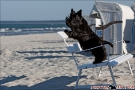Scottish-Terrier_Ostsee-2011_2463-1