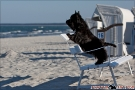 Scottish-Terrier_Ostsee-2011_2469-1