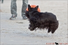 Scottish-Terrier_Ostsee-2011_4074