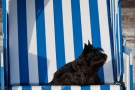 Scottish-Terrier_Ostsee-2011_5123