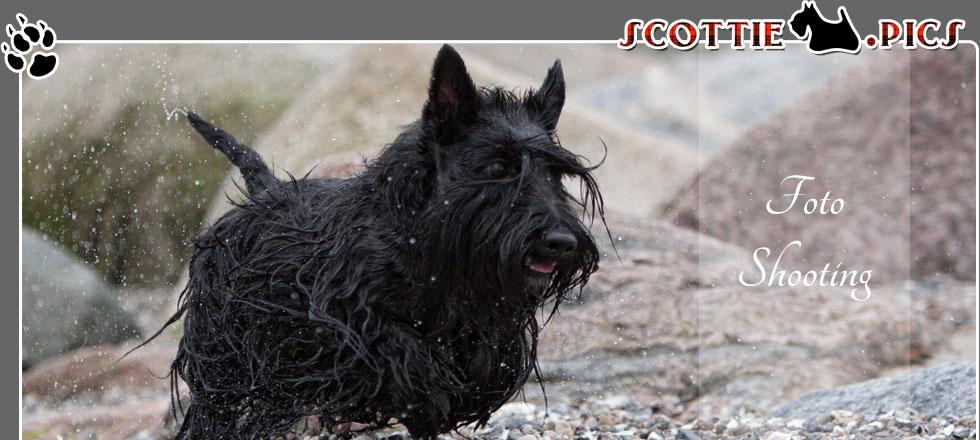 Kostenloses Hunde Fotoshooting