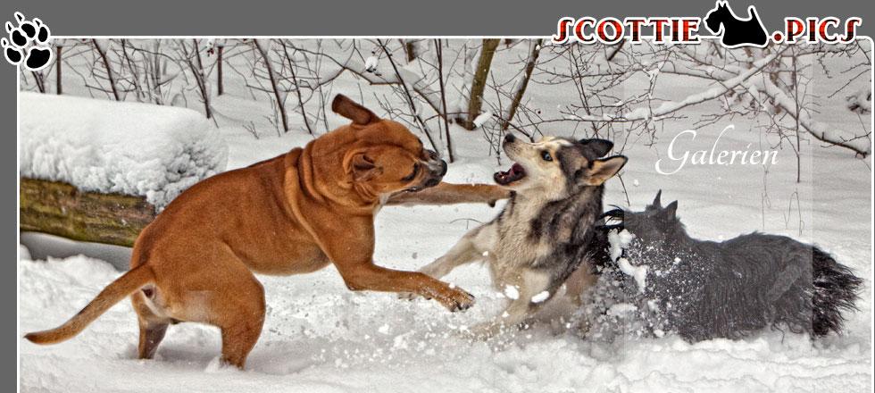Fotogalerien ScottieArts.com
