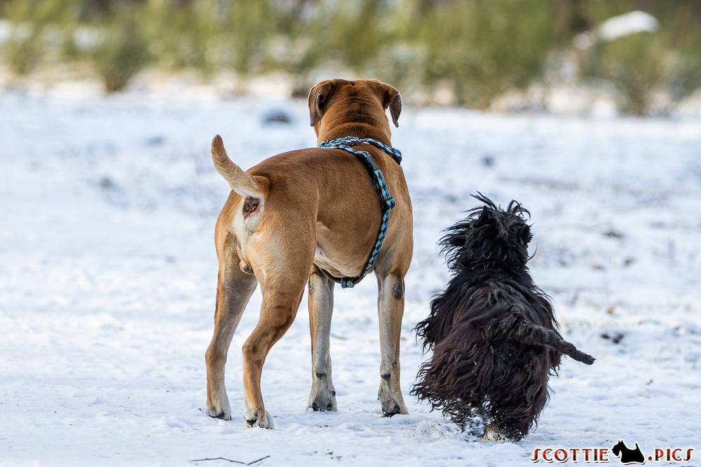 Best Buds: Floppy & Dickie