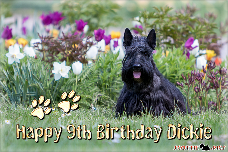 Happy 9th Birthday Dickie