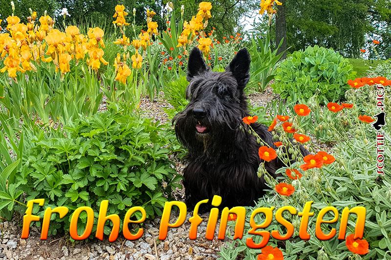 Dickie - Frohe Pfingsten