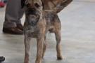 hundeausstellung-berlin-2011_8921