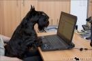 Aktionstag Kollege Hund 2012