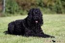 schwarzer-terrier-018-9027