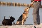 Scottish-Terrier_Ostsee-2011_4263-1