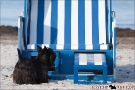 Scottish-Terrier_Ostsee-2011_5065-1