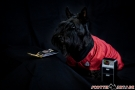 Scottish Terrier STAR TREK 2012