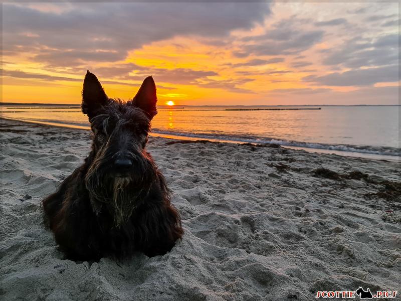 Jetzt. Sofort. Oder ich setze mich vor den Sonnenuntergang.